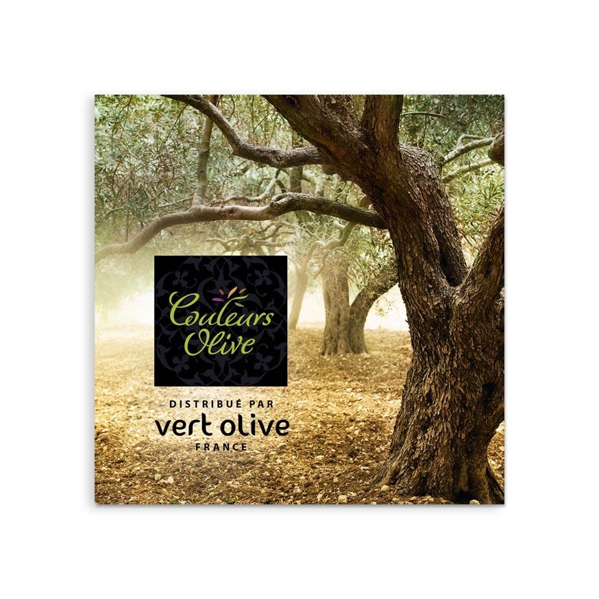 Dépliant Couleurs Olive